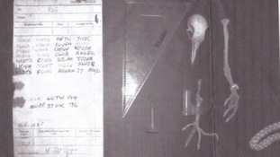 Pigeon skeleton and the coded message it was carrying during World War II.
