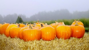 Simon's Blog - Pumpkin Soup Anyone?