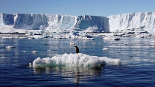 World's biggest marine reserve area created in Antarctica in 'milestone' conservation deal