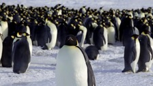 Antarctica reserve area six times size of UK to be created