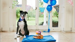 Britain's 'loneliest' dog finds new home