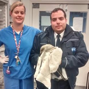 The RSPCA sent the bird to the South Essex Wildlife Hospital for more checks