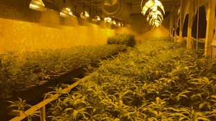 Community policing team uncovers £1million cannabis factory