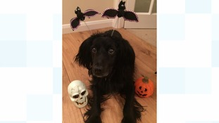 Your Howl-oween pictures: Lets see your best
