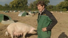 Steve Hart from Downham Market in Norfolk has just been named Pig Farmer of the Year.