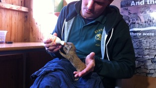 Mario the Mongoose is being well-looked after in his new home
