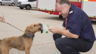 Fire service gets special breathing masks for pets