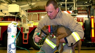 The oxygen masks are for dogs, cats, horses, guinea pigs and even snakes