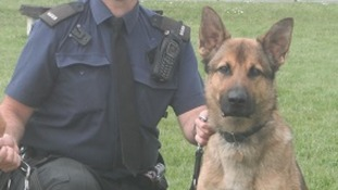 Police dog dies while on duty