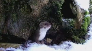 Captured on camera - the funny films that inspire a  renowned Yorkshire wildlife artist