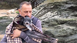 Walnut sits with his owner Mark on a rock at Porth beach