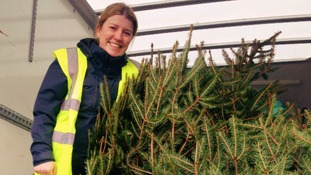 Hospice will collect and recycle xmas trees
