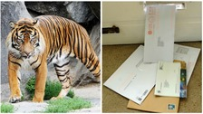 Scam mail the 'weight of a tiger' has been found in just six homes.