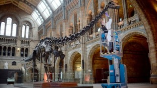Dippy the Diplodocus coming to Newcastle's Great North Museum in 2019