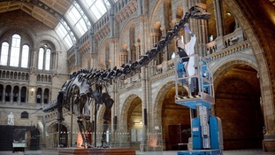 Dippy the Diplodocus' UK tour venues released