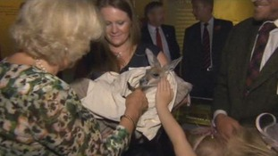 The Duchess of Cornwall meets a kangaroo at the Stockman's hall of fame at the Stockman's hall of fame on Longreach, Queensland.