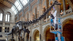 Dippy the Diplodocus is off to Norwich