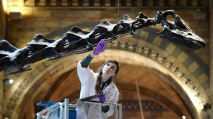 Jurassic tour: 1.5 million people will be getting close up to Dippy on his tour of the country.