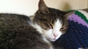 Owner's appeal after cat put to sleep following shooting