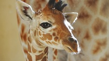Whipsnade's new addition