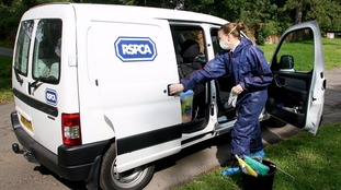 A file photo of an RSPCA Officer with her van.