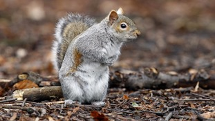 Trains in south east London delayed by a 'trapped squirrel'