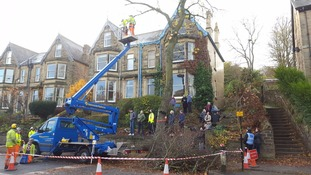 Contractors cut down the final tree in Rustlings Road, Sheffield,