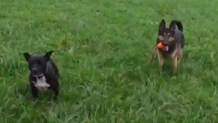 Police dogs 'paws' for Mannequin Challenge