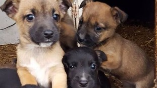 Dog dies trying to protect litter of puppies