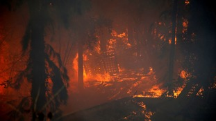 Wildfire rages in a wood near the northern city of Haifa