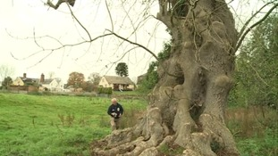 Worries as ash tree disease found across Midlands