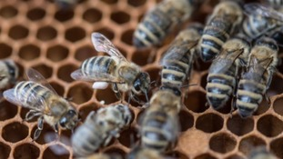 Think of the bees...Cornwall Council's pesticide promise