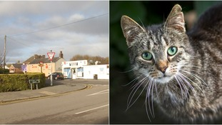 Several cats have died in Sutton Bridge.