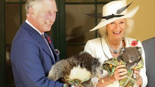 The Prince of Wales and Duchess of Cornwall hold koalas at Government House in Adelaide