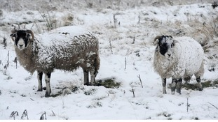 Sheep rustling warning in Scottish Borders