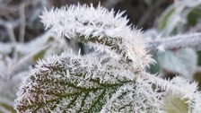 Frosty leaves at Norton near Letchworth Garden City in Hertfordshire.