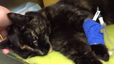 RSPCA appeal after cat shot in neck