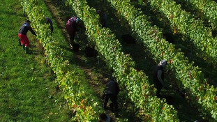 Changing levels of temperature and rainfall could make Essex the ideal place to produce wine.