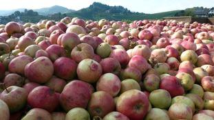 West Country cider farmers 'running out of barrels' after huge 2016 harvest