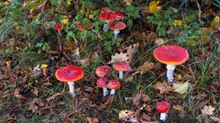'Magic mushroom' drug could help cancer patients ...