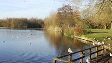 Sunshine at Needham Lakes