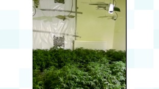 Police tweeted picture of the cannabis factory