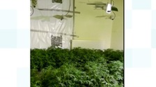 Police in Peterborough dismantle cannabis factory