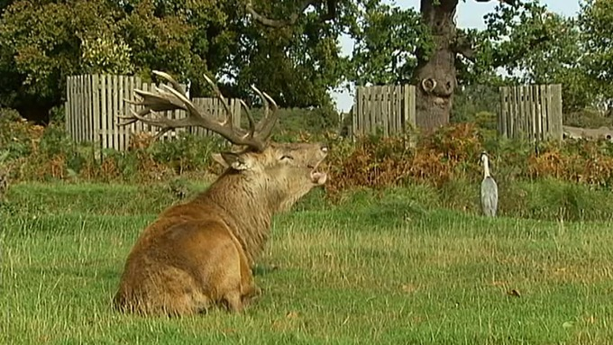 Epping Forest in London | Nearby hotels, shops and restaurants ...