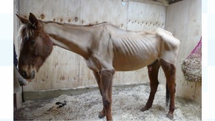 Woman who rode emaciated horse at equestrian event sentenced at court
