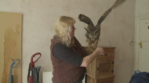 H-DOBBY_THE_OWL_LK