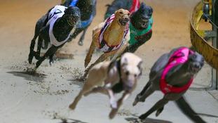 Greyhound stolen