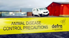 Bird flu protection zone 'challenging' for local businesses