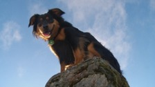 Meet the dog aiming to climb all 214 Wainwrights