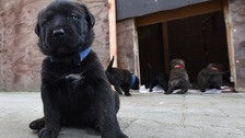 Watch: Surge in smuggled puppies visiting vet